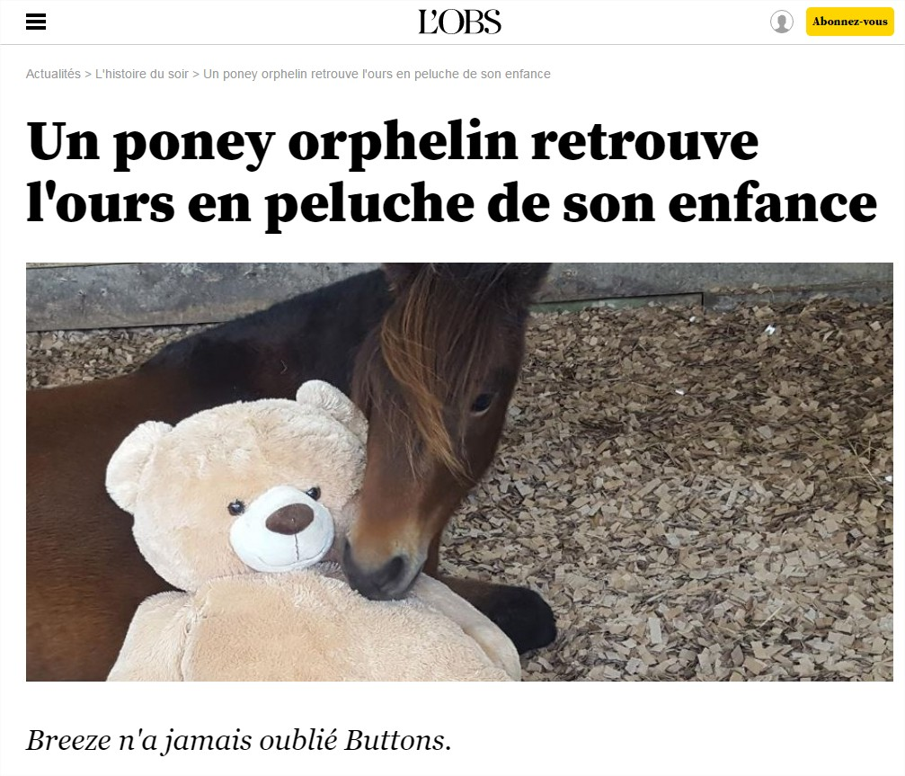 poney-ours